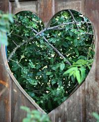 garden heart planter