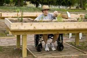 raised garden beds for the handicapped