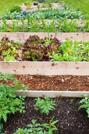 Build Raised Vegetable Garden Beds