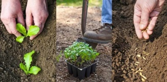 Deciding When to Plant Vegetables in Your Area