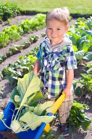 Little boy reaps turnip greens from a potager garden