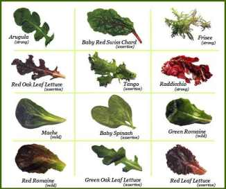 Different types of lettue greens