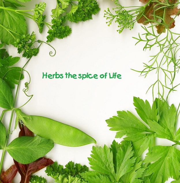 Herbs and Spices Through the Years