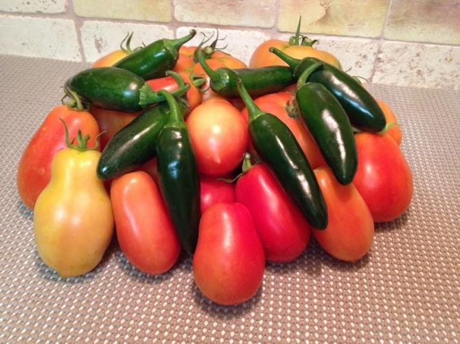 Garedn Fresh Tomatoes and Salsa
