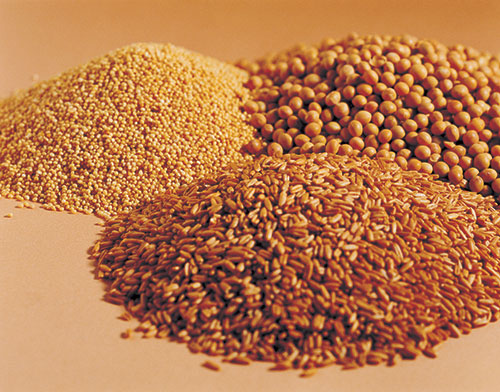 Wheat Free Alternative Grains