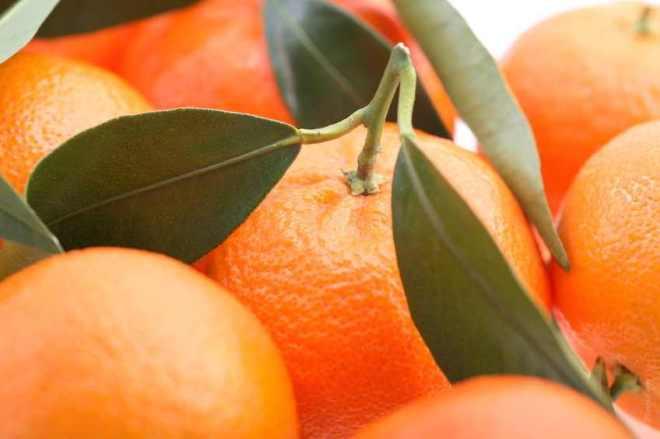 Fresh Picked Oranges