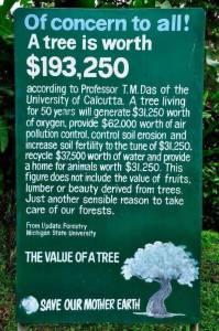 TreeWorth