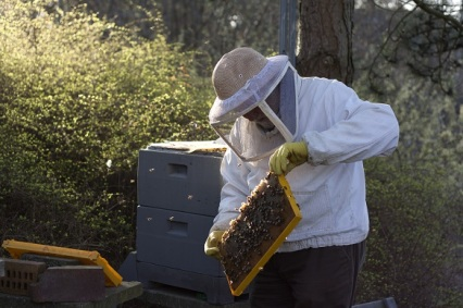 Support Your Local Beekeepers