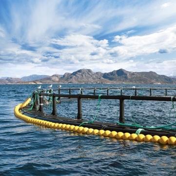 fish farm cage in Norwegian Sea