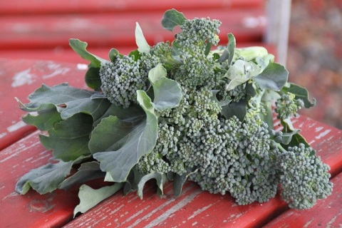 The Broccoli – Essence of Real Food