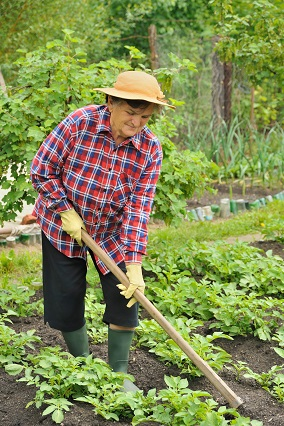 An Organic Vegetable Garden Is Threefold
