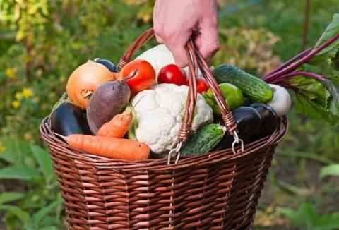 Benefits of Growing an Organic Vegetable Garden