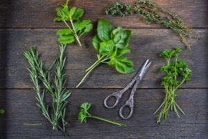 culinary and medicinal herbs prepared for drying