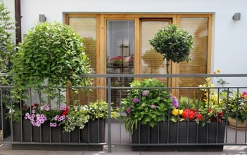 Grow your own ptted herbs and plants on your balcony or patio