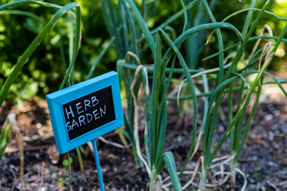 Growing Your Own Health Promoting Herbs