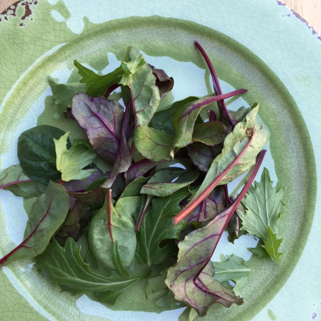 plate of baby greens