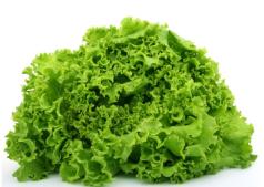 leafy green lettuce