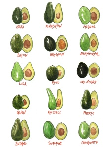 list with pictures of avocado varieties