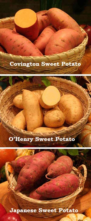 3 popular sweet potato varieties sold at market