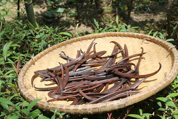 basket of vanilla beans - How To Flavor With Vanilla