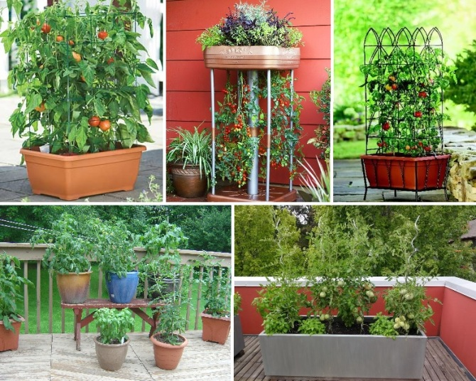 The Best Tomato Varieties For Your Container Gardening