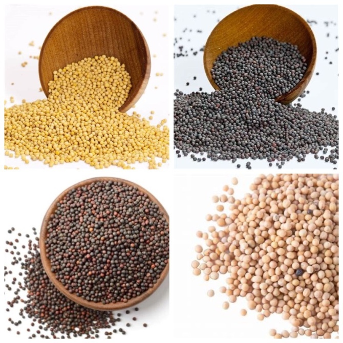 Mustard seed colors