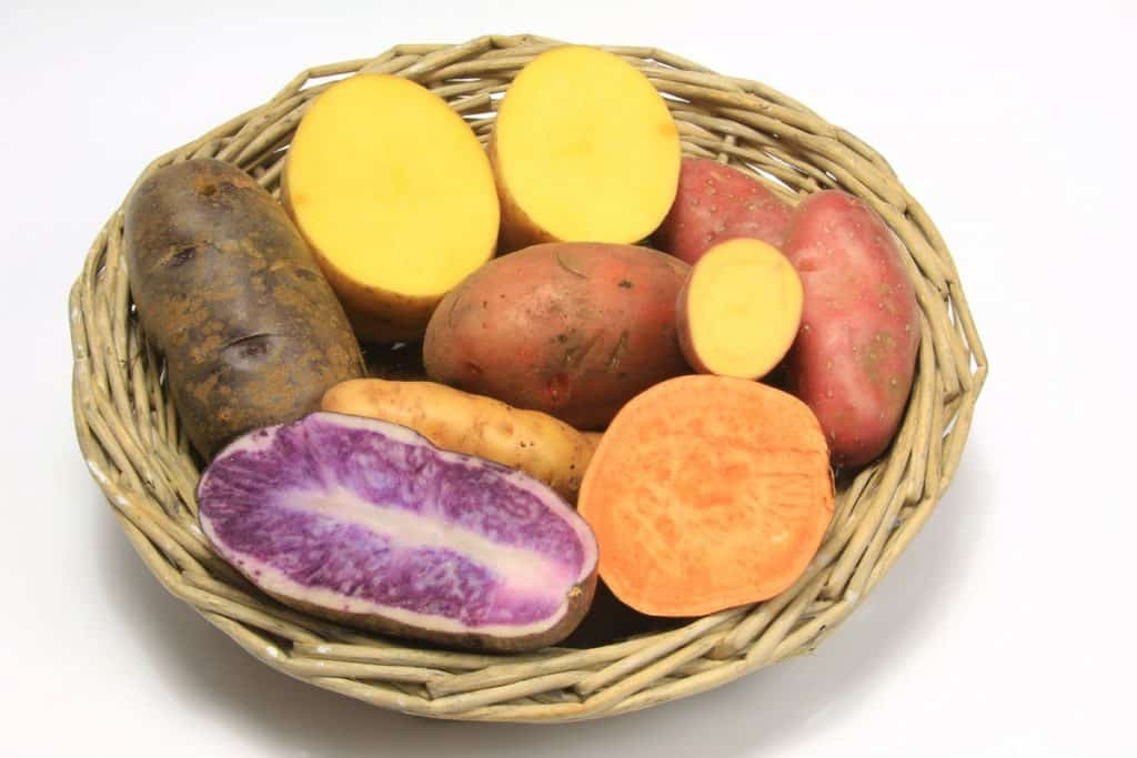 Variety of sweet potatoes