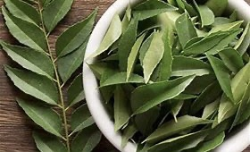 Curry leaves of the curry tree